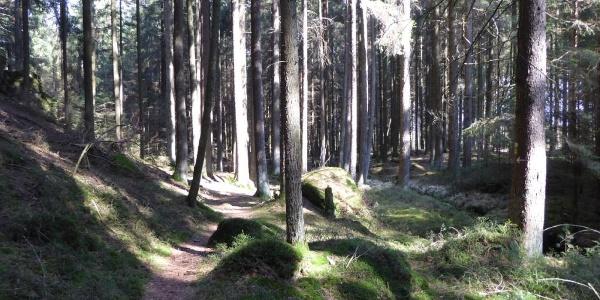 schöner Waldpfad