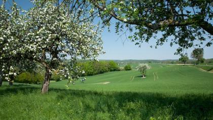 Streuobstwiesen rund um das Kloster Lobenfeld