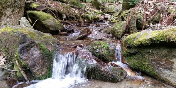 Wandern in Warth | Bucklige Welt