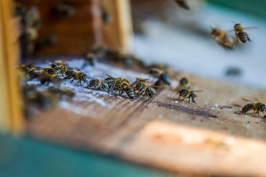 Bienenlehrpfad Kleinhöhenrain