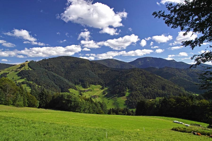 Breitackerpfad (Wildnispfad)