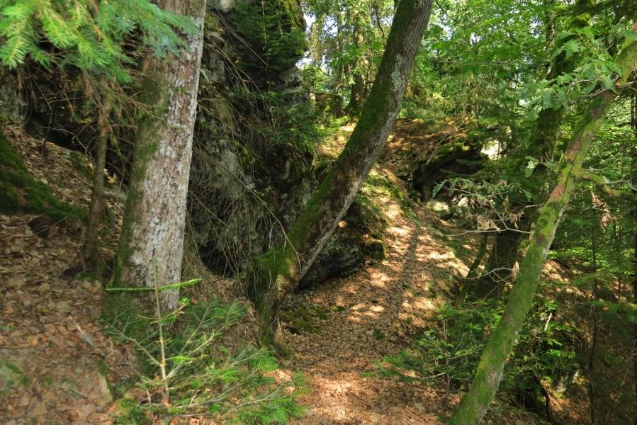 Mühlefelsenpfad (Wildnispfad Mühlefelsen-Bannwald)