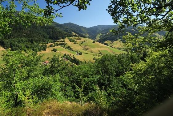Schwärzhaldepfad (Wildnispfad)