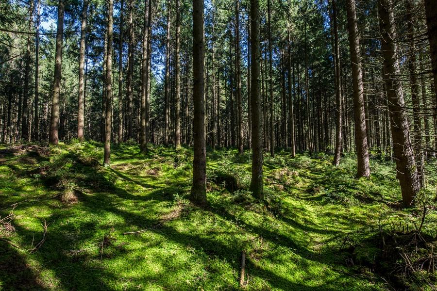 Wandern auf den Spuren der Holnstainer Ritter