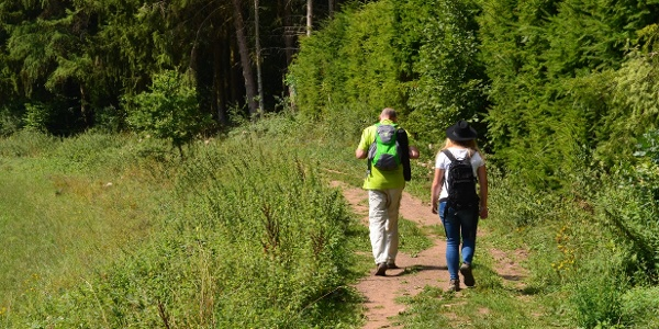Wald- und Wiesenwege Achtsamkeits-Pfad