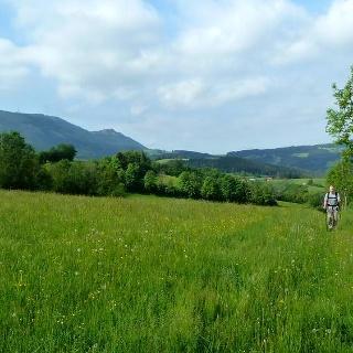 Saftige Bergwiesen bei Burgstall