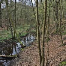 Druslach - Bachwanderung (1)