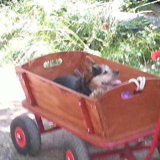 Hundi sein Taxi er ist schon 15 Jahre alt