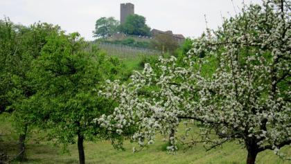 Die Ravensburg vom Kohlbach aus