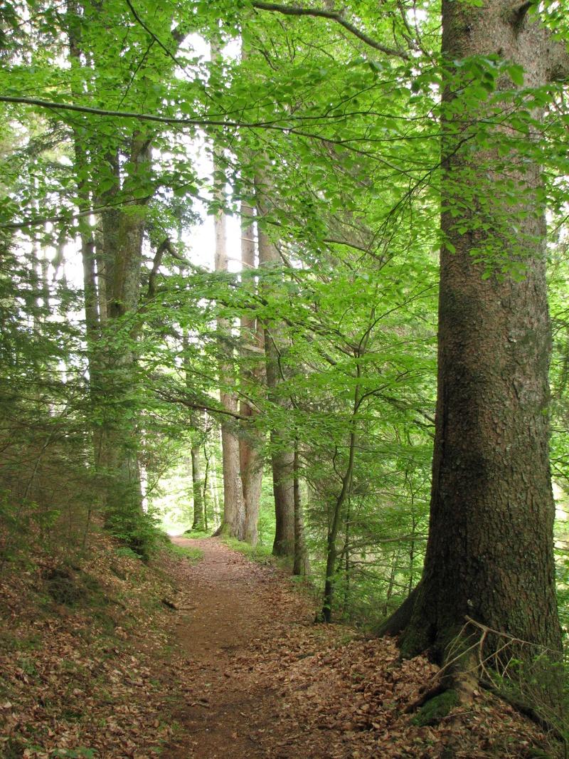 Freudenstadt-Musbach Trailrunde