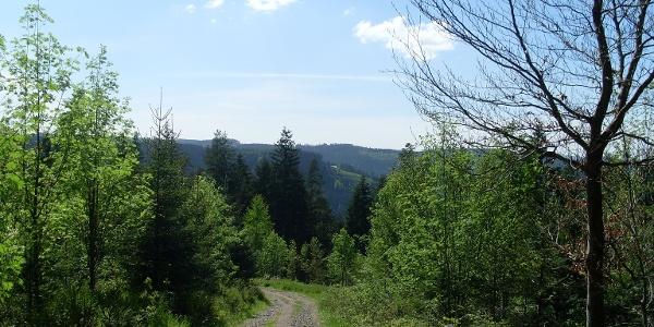 Ausblick oberhalb der Birkleshütte Richtung Stöckerkopf