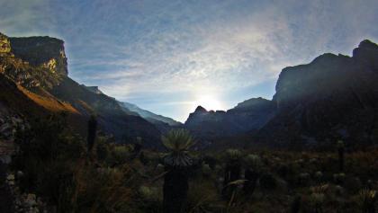 """Mystische Morgenstimmung im Valle de Lagunillas. Typisch für die Vegetationsform des Páramo sind die sog. """"frailejones"""" im Vordergrund."""
