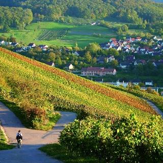 Weinberge bei Pfedelbach, Hohenlohe