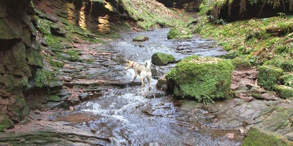 Xanderklinge - durchs Wasser nach oben