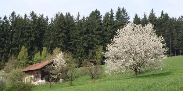 Weiler Herrnwies