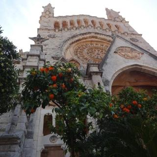 Orangen sogar vor der Kirche in Soller