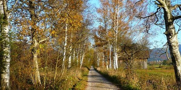 Loisach-Kochelsee-Moos im Herbst