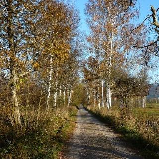 Moosweg im Herbst