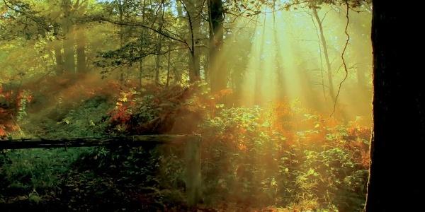 Klangwald an der Waldroute