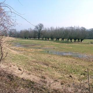 Gebiet Taubenborn im Frühjahr