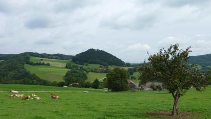 Blick vom Fuchsbauer zur Ruine St. Pankraz