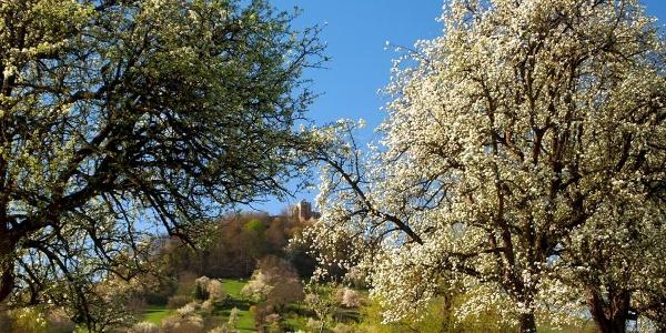 Burg Staufen und Obstallee am Weg