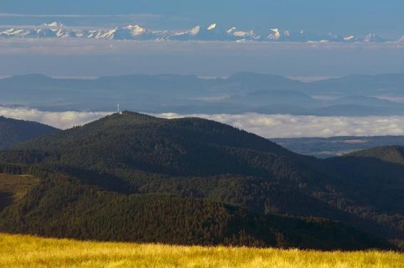 Südschwarzwälder Bergkönig