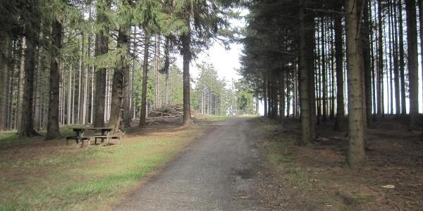 Beschaulicher Waldweg im Jauerlinger Gipfelbereich