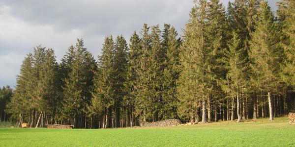Blick über grüne Wiesen und dunkle Wälder....