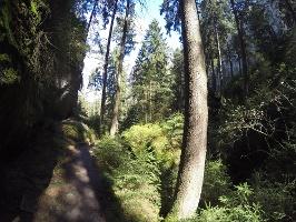 Foto Die Vegetation und die Sandsteinfelsen in der Gautschgrotte sind wunderbar