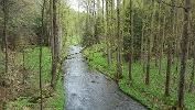 Foto immer wieder eine andere Vegetation im Polenztal