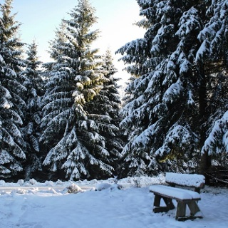 Winterlandschaft in Elbingerode