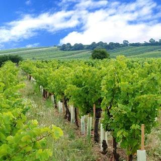 Radweg durch die Weinberge entland es Weingartenradweges