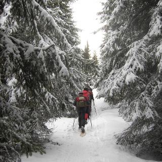 Klippitztörl - mitten durch den Wald