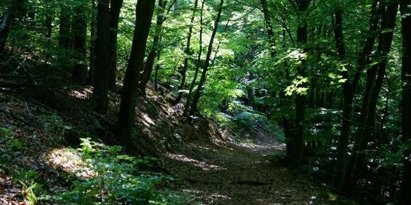 Schattige Waldwege