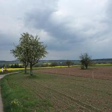zwischen Hamberg und Steinegg