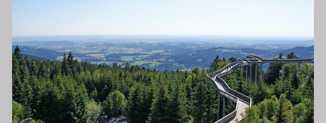 WaldWipfelWeg in Maibrunn