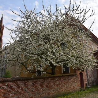 Frühling beim Kloster Malchow