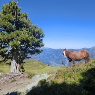 Pferdeherde vor der Schlossalm