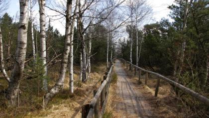 Bohlenweg durch das Moor