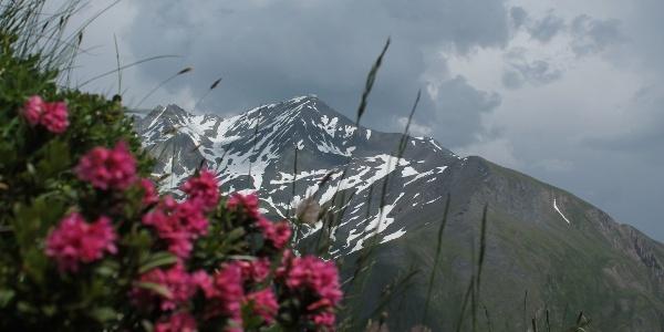 Alpenrosen unterwegs