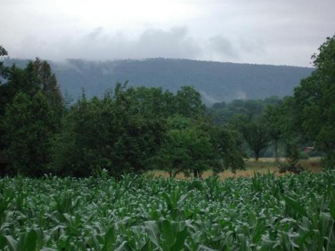 Der Schwarzwald bei Malsch