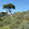Trialabfahrt am Monte Faudo