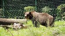 Von Bären und Bärlauch in Bielefeld