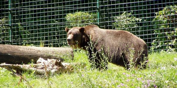 Bärengehege Tierpark Olderdissen
