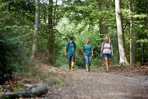 Im Langenlonsheimer Wald auf der Vitaltour Wald, Wein & Horizonte (Foto: , Quelle: Verbandsgemeinde Langenlonsheim, Foto Steve Jacoby)
