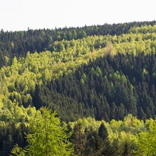 Blick von der Thüringer Warte auf das Grüne Band, Foto: Frankenwald Tourismus/Andreas Hub