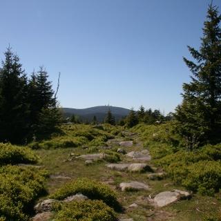 Blick vom Hohnekopf auf den Brocken