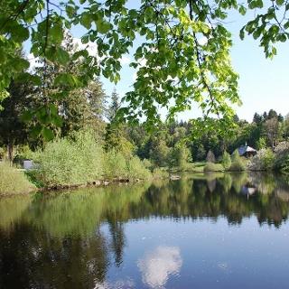 Klosterweiher, einstiges Fischwasser des Klosters St. Blasien bei Dachsberg-Wittenschwand