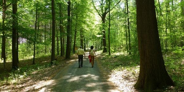 Wandern im Colditzer Forst